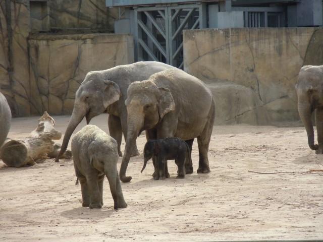 Слоновий парк (Elefantenpark)