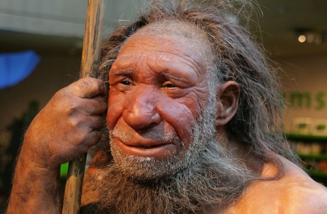 Неандерталь (Neanderthal Museum)