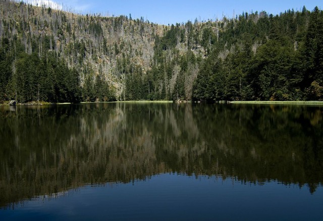 """Национальный парк """"Баварский лес"""" (Nationalpark Bayerischer Wald)"""
