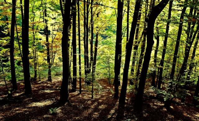 Природный парк Пфальцервальд (Naturpark Pfälzerwald) Германия