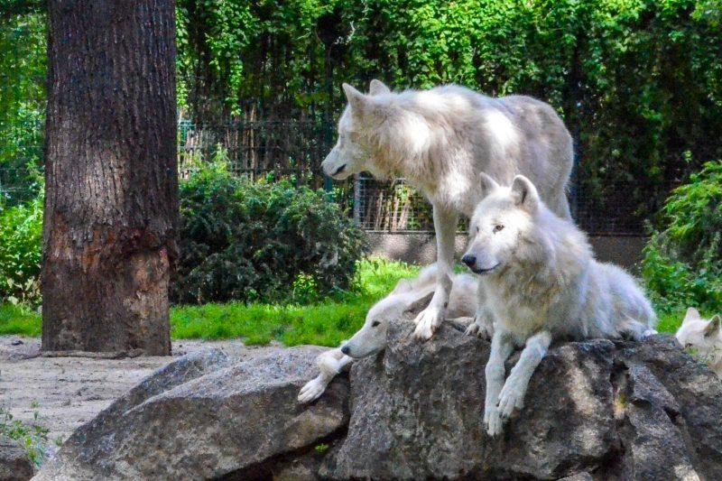 Для животных созданы условия, близкие к естественным