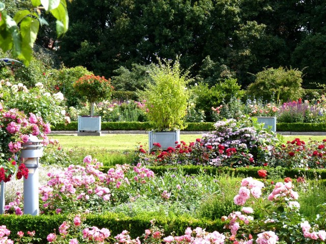 Розовый сад (Rosengarten)