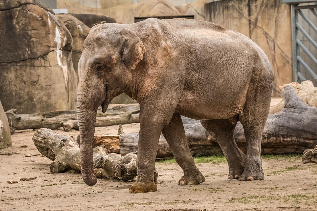 Кёльнский зоопарк
