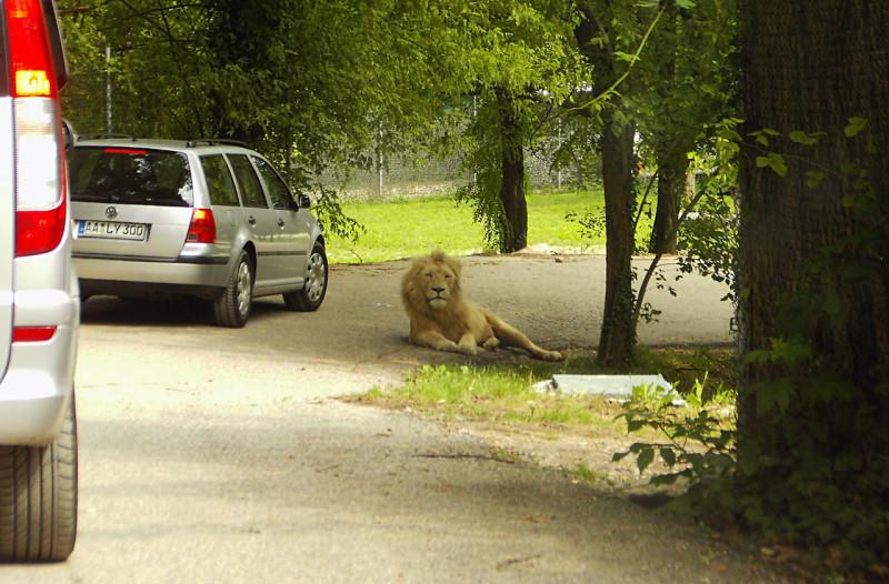 "Сафари-парк ""Натура Вива» (Safari-Park Natura Viva)"