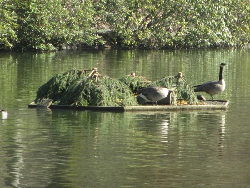 Рукотворный островок
