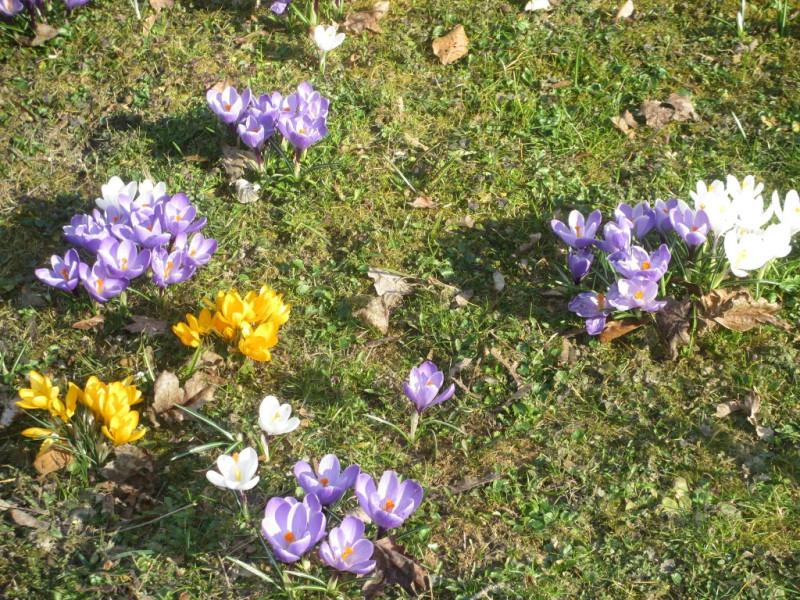 Цветущий газон