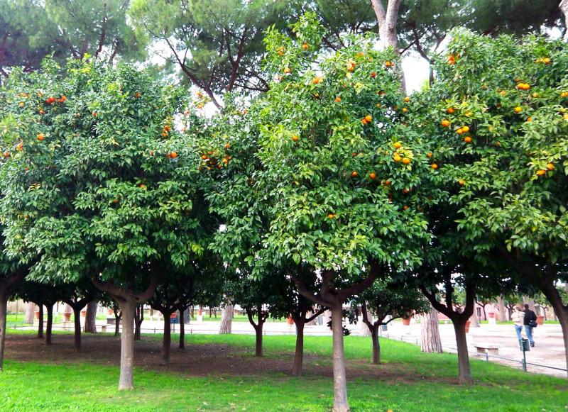 Апельсиновый сад (Giardino degli Aranci)