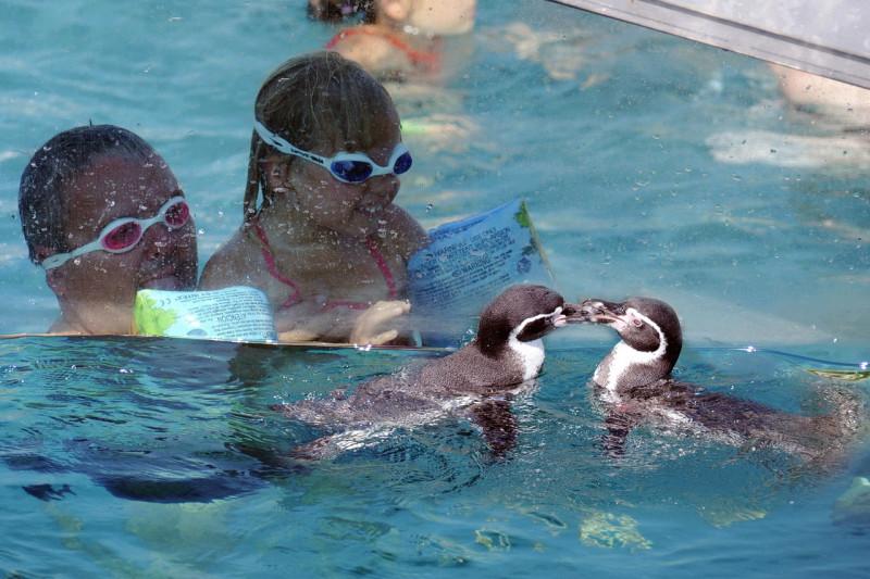 Купание с пингвинами в  Термах