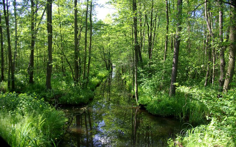 Шпреевальд - Волшебный лес