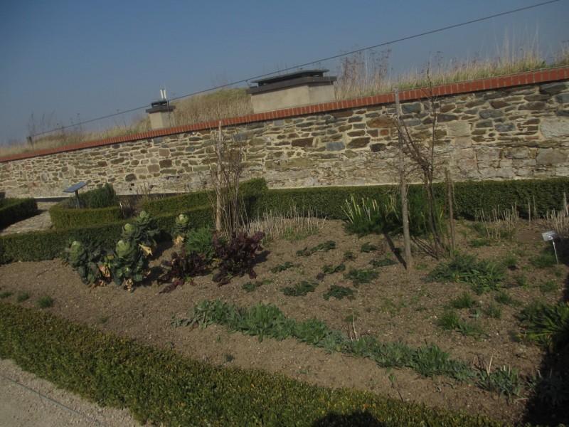Газон или огородная грядка?