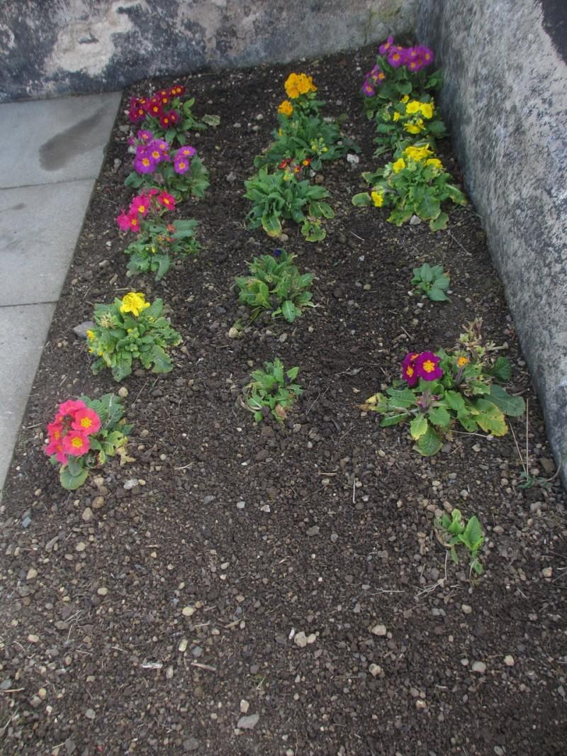Мартовские цветочки