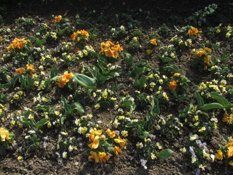 Кобленц. Март. Цветочный газон