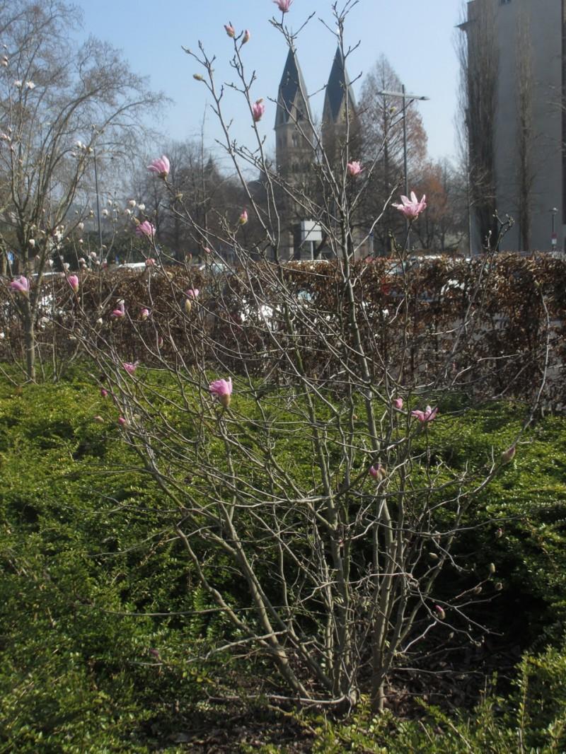 Весна в Кобленце