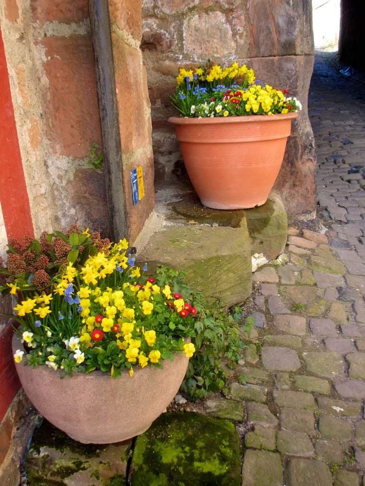 Цветы у ворот замка