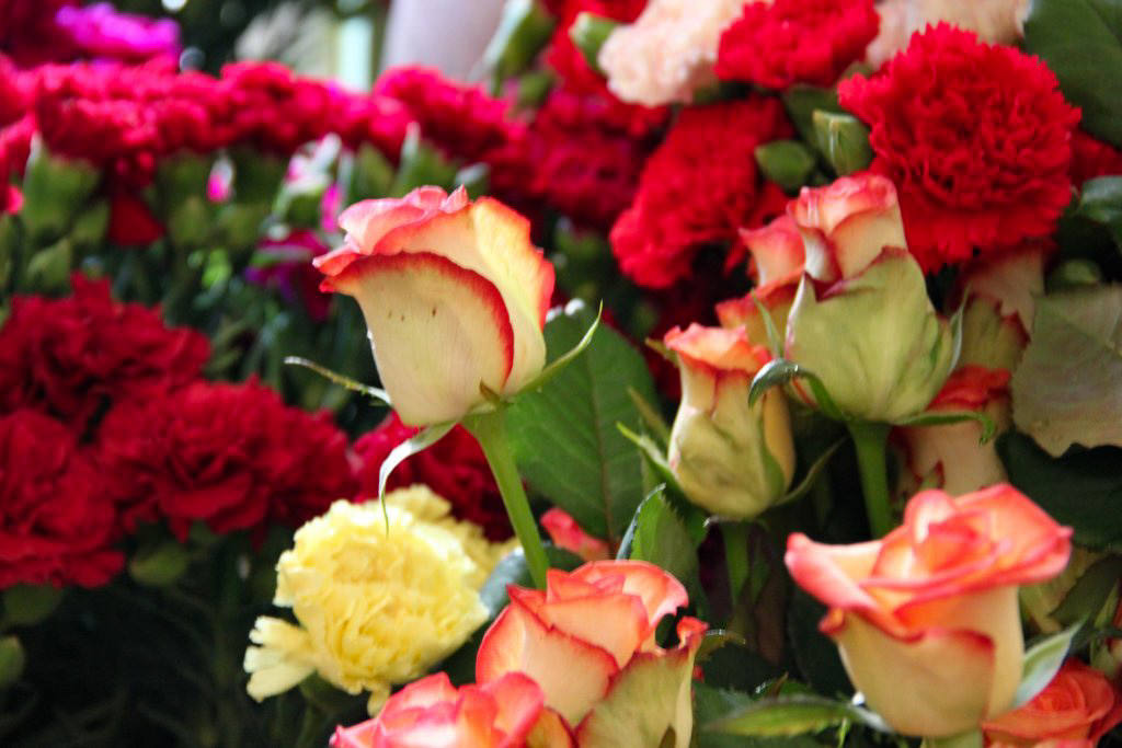Цветы Сан-Ремо