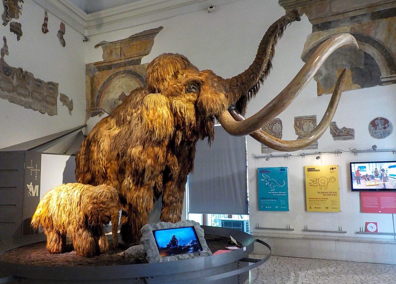 Музей естественных наук Энрико Каффи (Museo di scienze naturali Enrico Caffi)